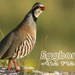 red-legged_partridge_1
